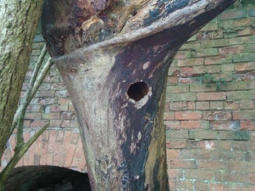 Woodpeckerhole