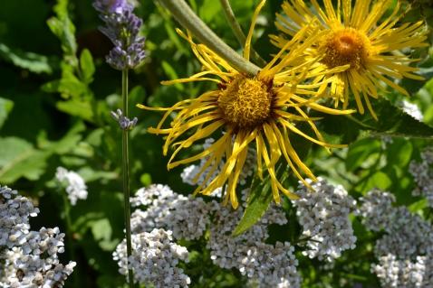Herb garden flowers