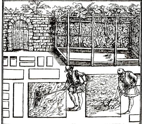 Tudor Garden