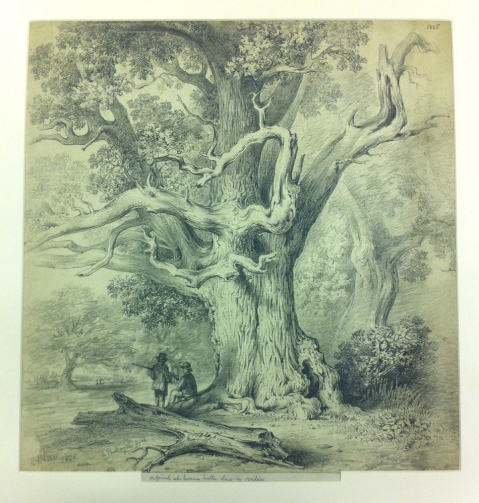 Drawing of a tree by Henry Harris Lines