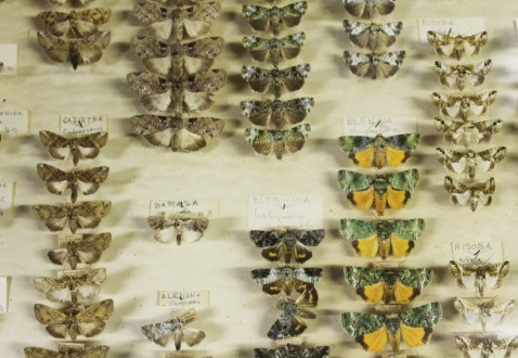 The butterfly collection at the Museum Collections Centre